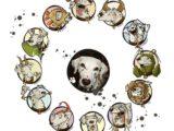 Гороскоп для животных — персональный гороскоп от опытного астролога