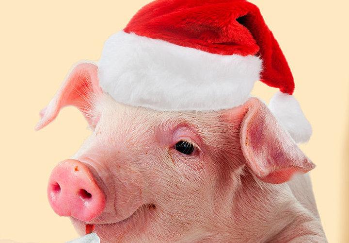 Прогноз на 2019 год свиньи